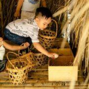 Fusion thực hiện cam kết sử dụng trứng gà nuôi thả tại Việt Nam